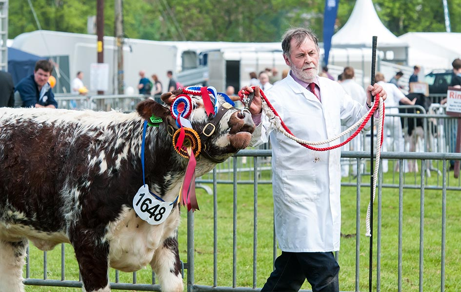 Livestock at the Shropshire County Show<