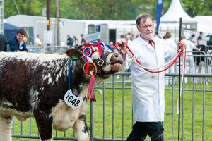 Livestock at the Shropshire County Show Thumbnail